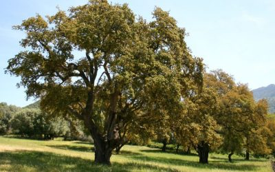 Reflexión: El árbol que no sabia quién era