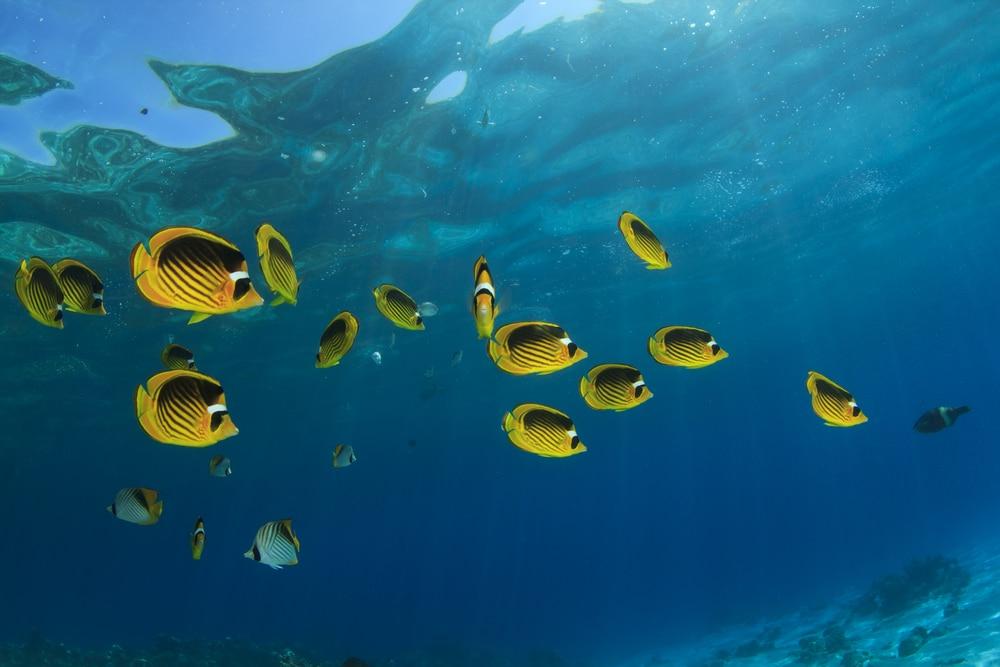 Fábula del pez que busca el océano